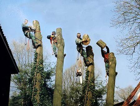 Baumpflege  FREEMAN • Baumpflege • Fällung • Sanierung